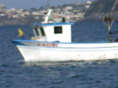 Bracconiere marino 18 Marzo 2017 (14) comp