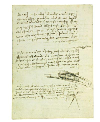 Codice del volo degli uccelli di Leonardo
