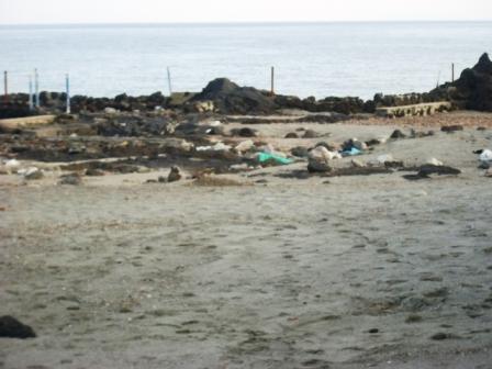 Foto scempi spiagge dicembre 2014 comp (11)