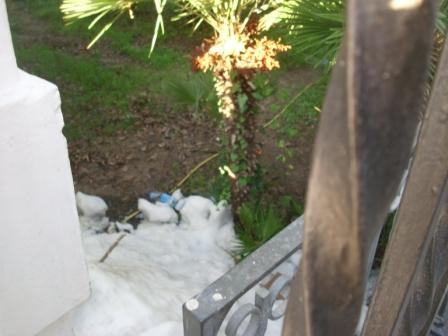 Ghiaccio in pineta
