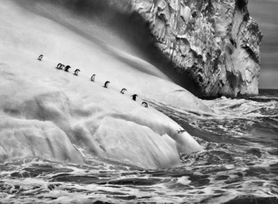 SEBASTIAO SALGADO isole South Sandwuich