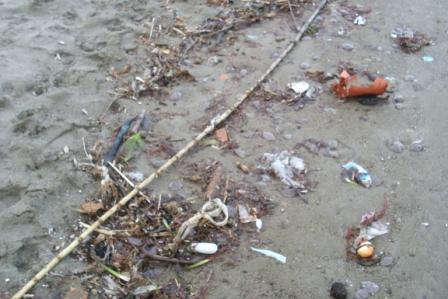 Meduse spiaggiate d'inverno (11)