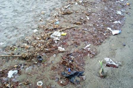Meduse spiaggiate d'inverno (12)