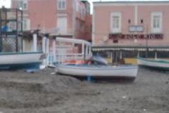 Meduse spiaggiate d'inverno (13)