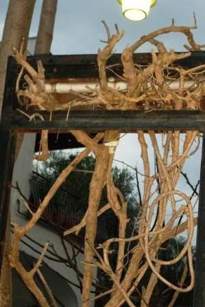 Scempi alberi pinete ischia genn 2015 (17)