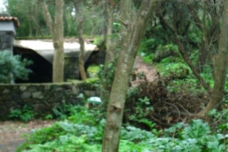 Scempi alberi pinete ischia genn 2015 (26)