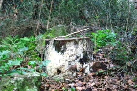 Scempi alberi pinete ischia genn 2015 (27)