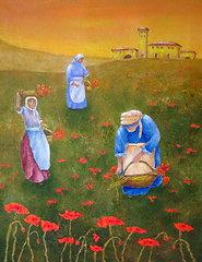 harvesting-poppies-in-tuscany-pamela-allegretto