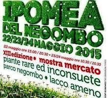 logo ipomea 2015 1