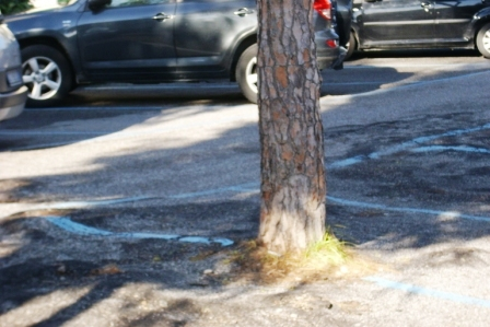 siringa parcheggio mirabella 20150227 comp (8)
